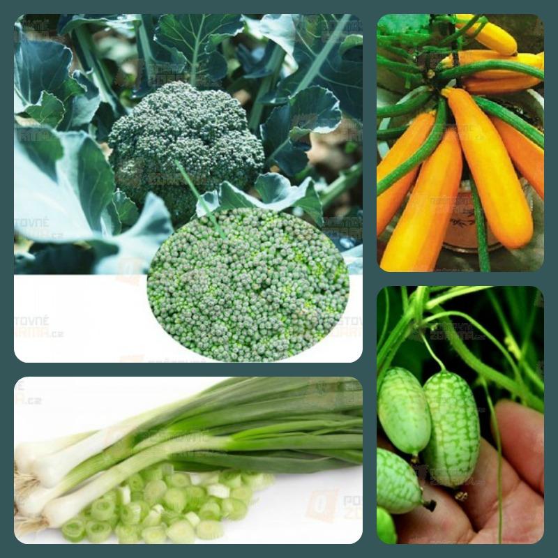 Pěstování semínek