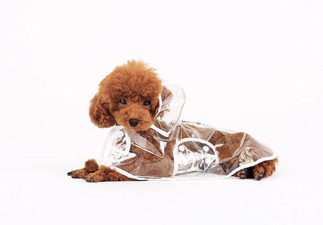 Pláštěnka pro psy - transparentní 1