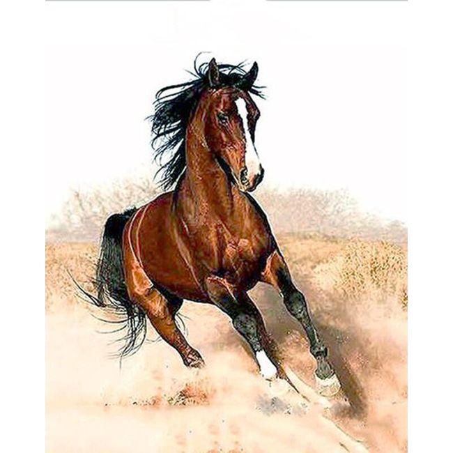 Běžící kůň - vymaluj si sám 1