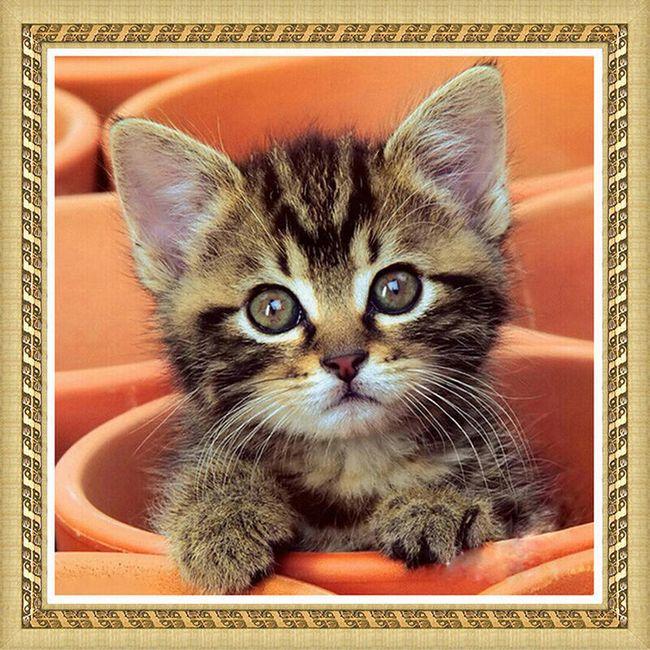 DIY obraz z kamínků - koťátko 1